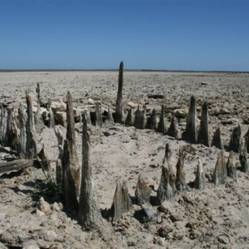 Aboriginal Fishtrap, Lake Alexandrina. Photo by Scott Heyes, March 2008